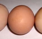 orpington-eggs