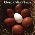1500x1500-marans-eggs