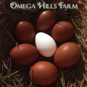 1500×1500-marans-eggs